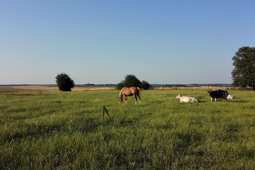 Ma jument, mes vaches et la vue panoramique qui vous attend...