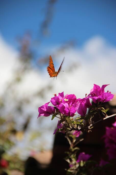 Fauna y flora del jardín