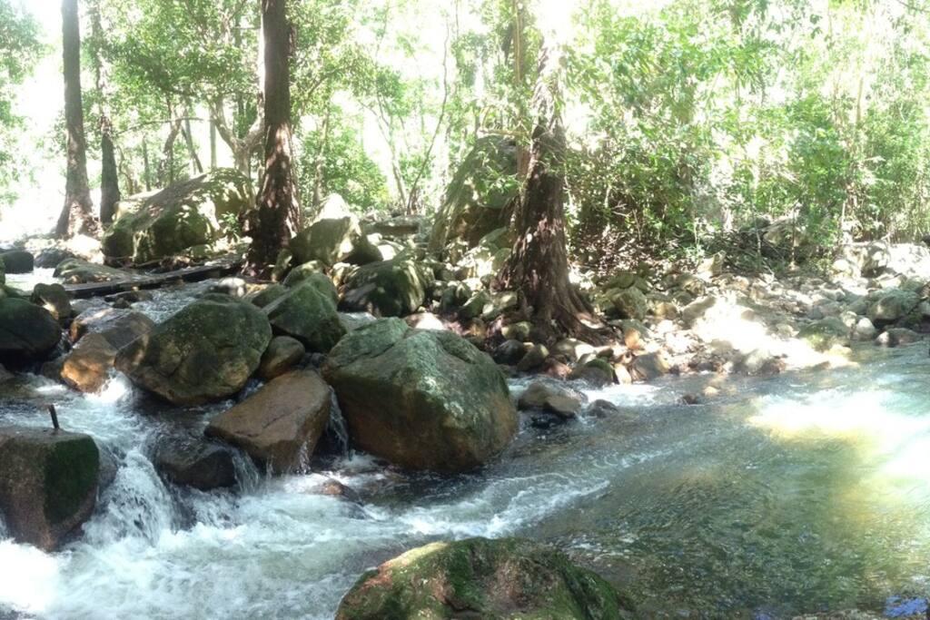Jourama Falls National Park - experience the rainforest.