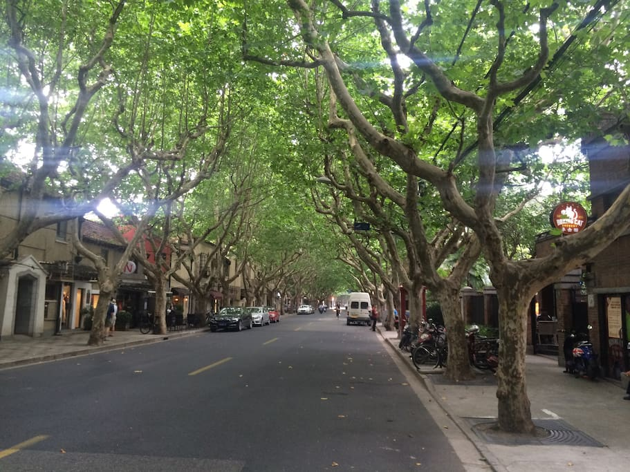 Street right outside apartment - quiet, tree-lined heart of the French Concession area.  Plus right next door to the well-known Boxing Cat craft beer brewery and restaurant!