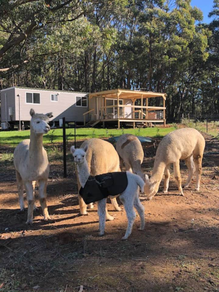 Alpaca Farm Stay