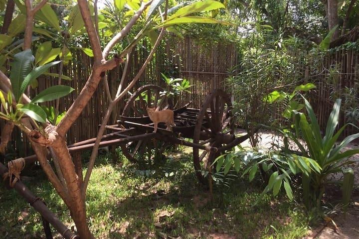 Beautiful cat house in tropical neighbourhood