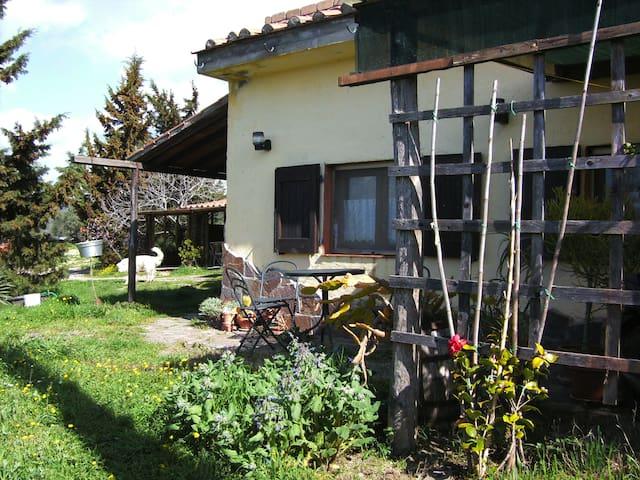 Terassenhaus - Roccastrada - Casa