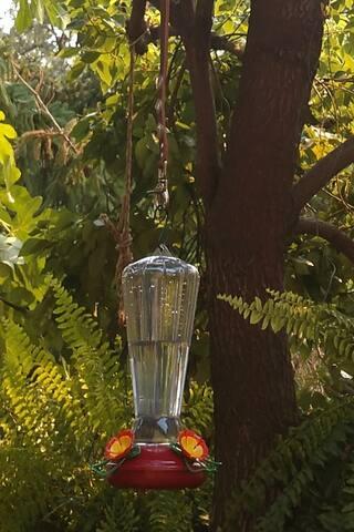 One of 4 Hummingbird Feeders. Let the Hummingbird Wars Begin!