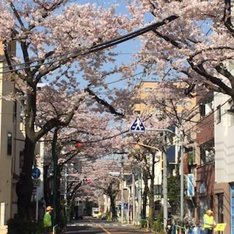 部屋から徒歩2分 「カンカン森 通りの桜並木」