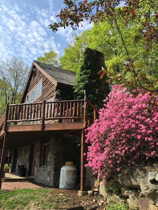 Spring at the Cabin