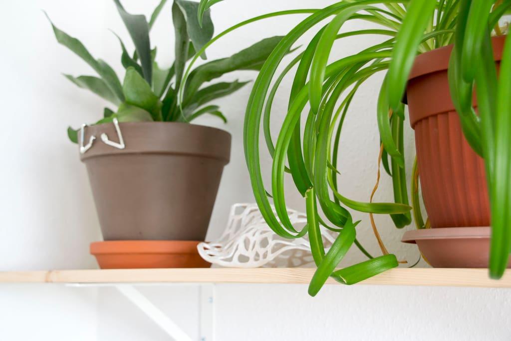 bedroom, plants