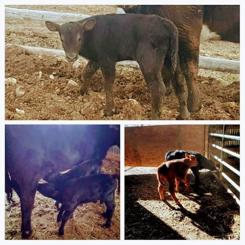 Spring brings new life to the ranch, sometimes twins!