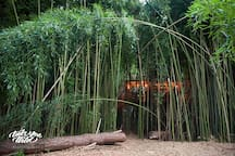 Lindsay Appel's beautiful photo of the treehouse folded into the bamboo forest.  This is the treehouse as you approach--during the day you won't be able to see much more than a vague outline.  It's very private and remote and our herd of alpacas and llamas wander through the forest.