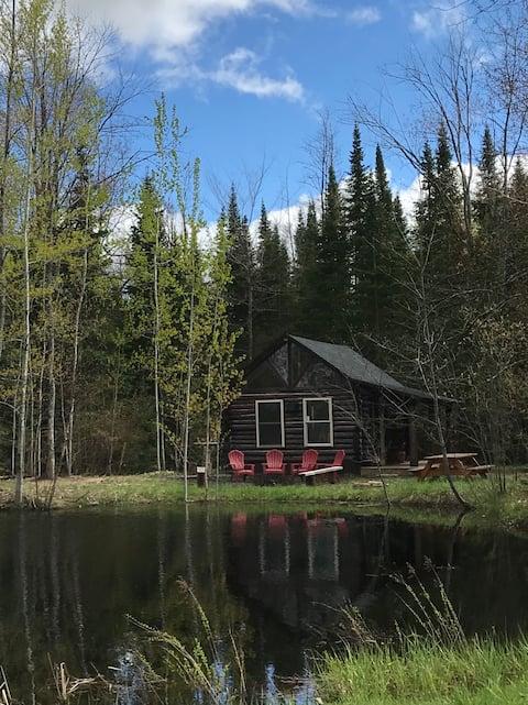 Cozy, rustic one room cabin.