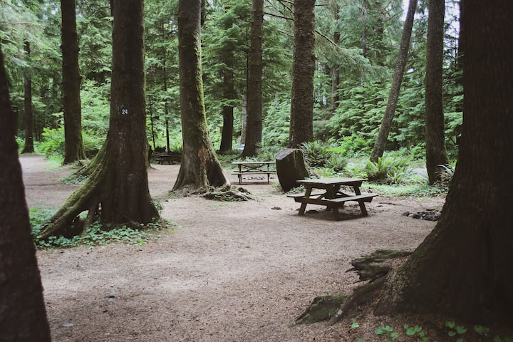 Forest Campsite #19