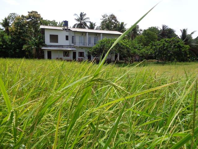 Samanala Rest - Polonnaruwa
