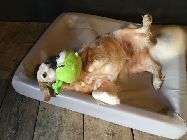 Optional, doggy equipment
