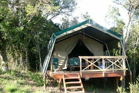 Luxury Safari Tented Lodge - Rheenendal
