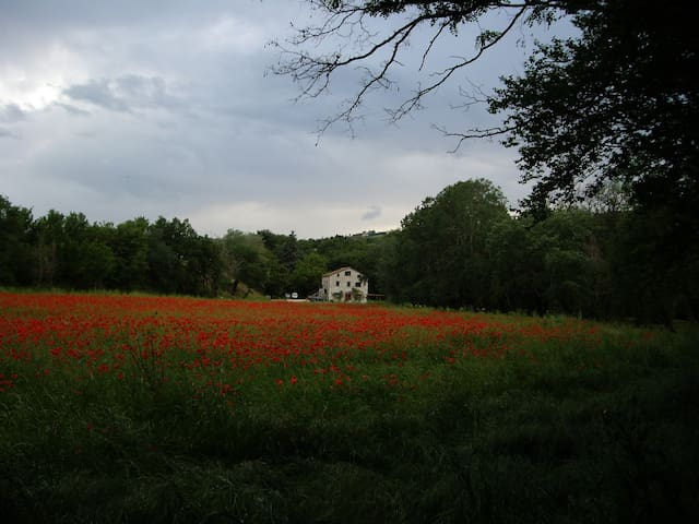 """Farm  """"Il Pagliaio del monaco"""" - Montagano (CB) - Bed & Breakfast"""