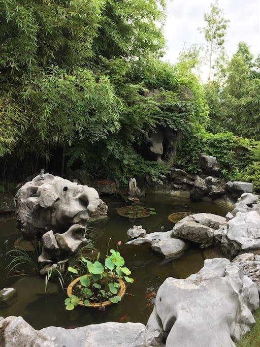 花园小池塘