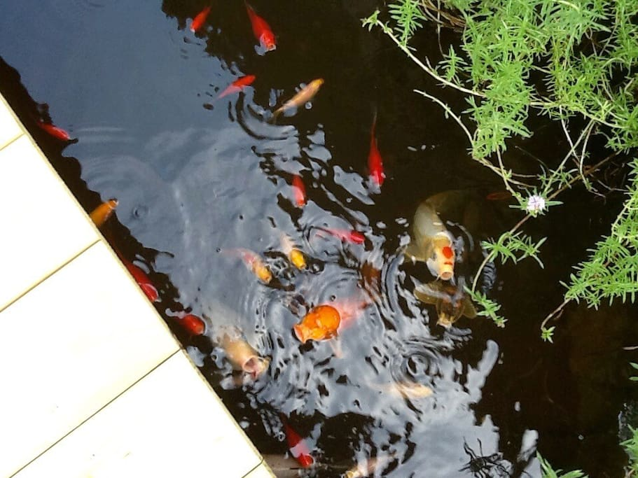 We have two koi ponds right off of outdoor kitchen.