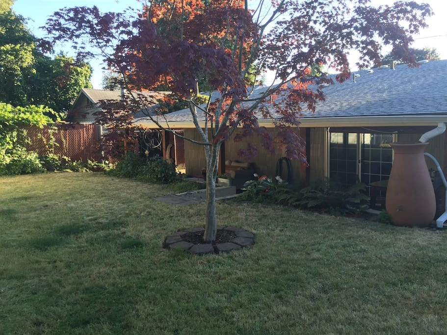 This is the backyard. The yard, front and back, is fully fenced.