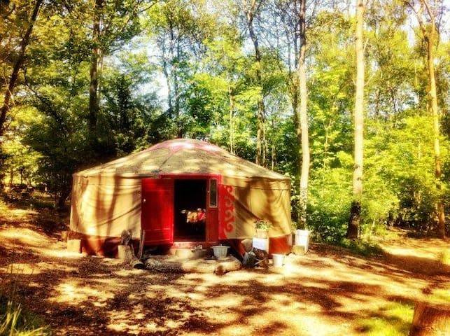 Kushti yurt, a Mongolian ger - East Sussex - Jurta