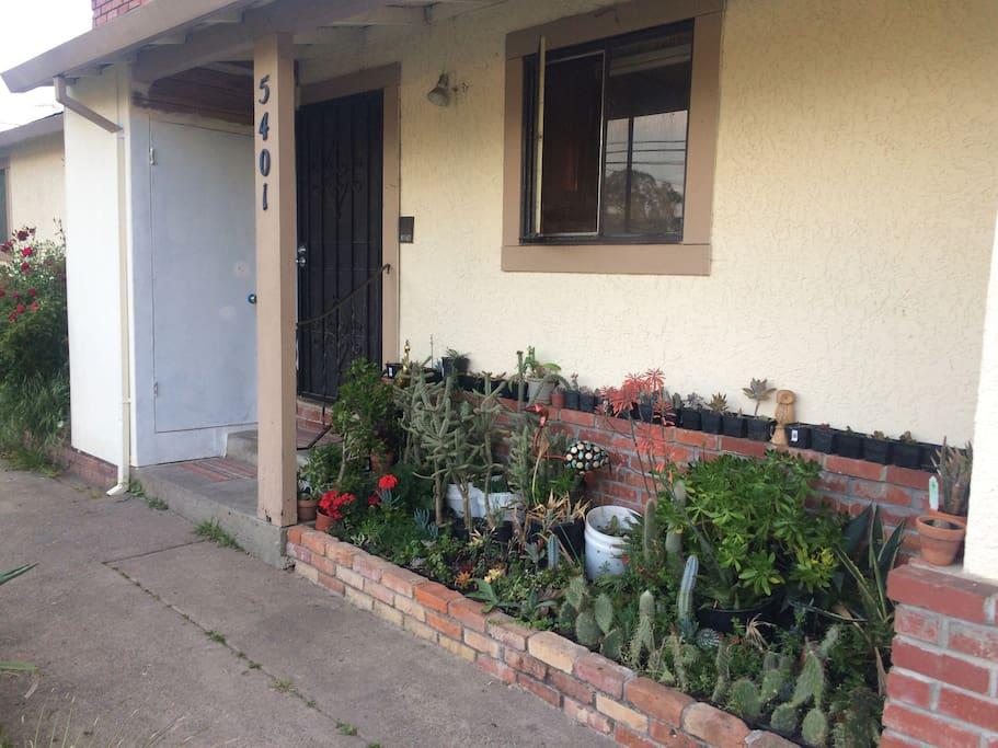 Front Entry Door next to a Cacti Garden