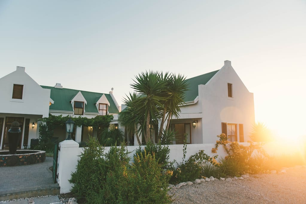 Front of Fynbos during sunset