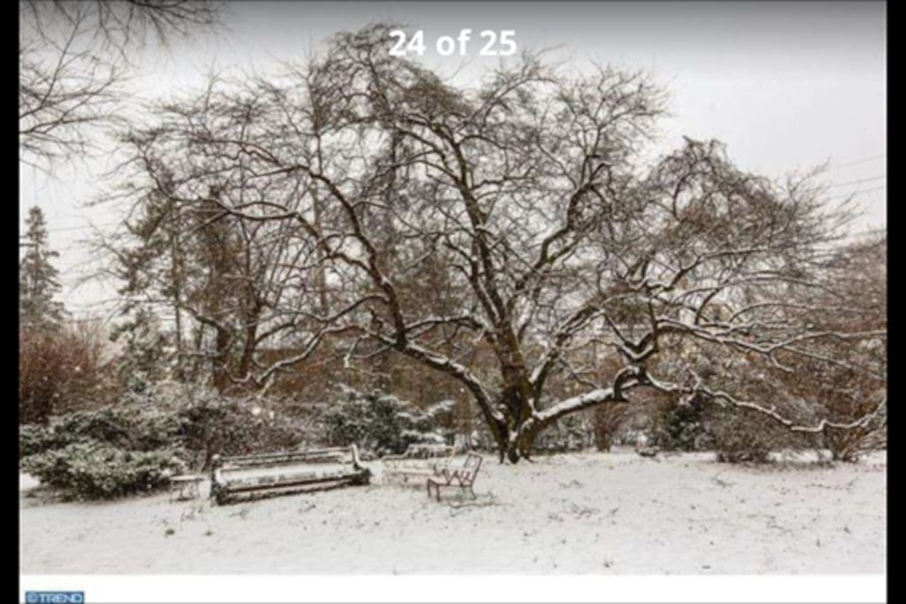 lovely sitting area in yard next to pond (pictured in winter)