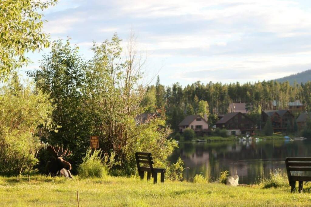 Moose by Columbine Lake