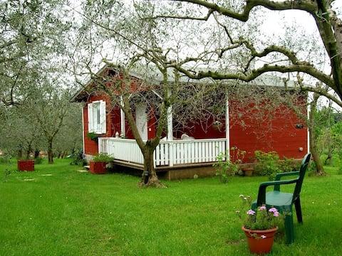 Olive Tree Hill: Privat hytte nær Rom