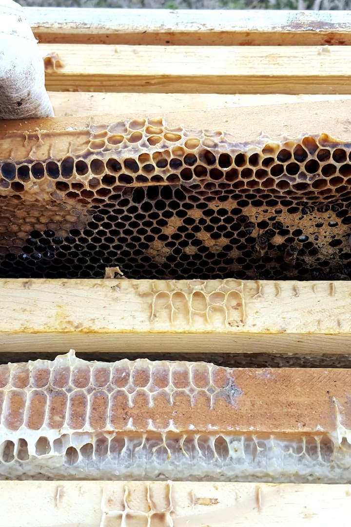 Beeswax and brood