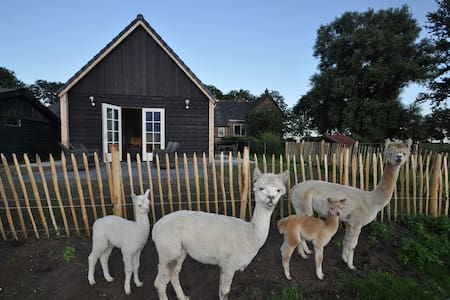 Alpaca guesthouse, private entry - IJsselmuiden