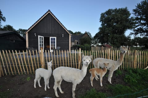 Alpaca guesthouse, private entry