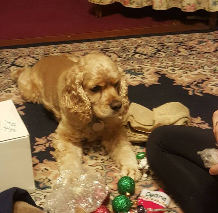 Canine host #1-Tucker