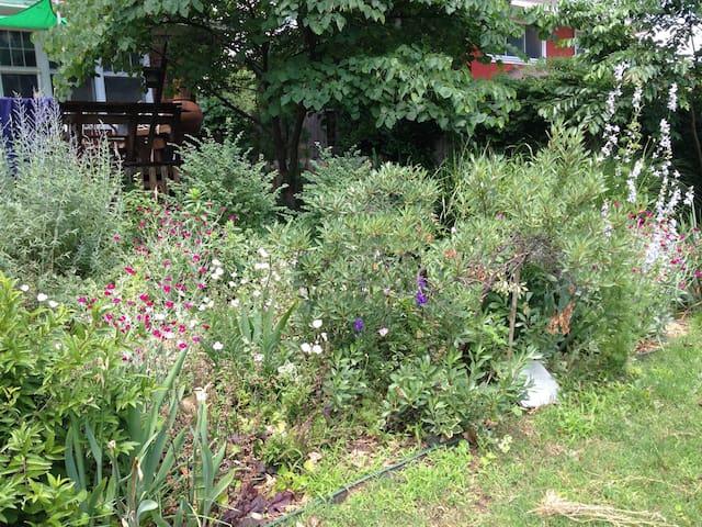 back yard gardens