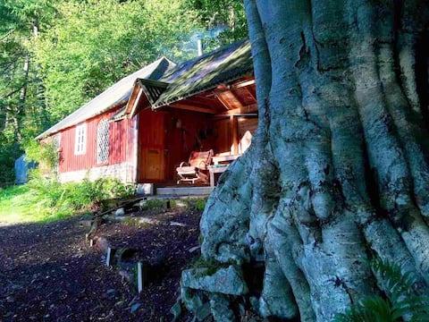 Unwind in a stunning rustic woodland cabin