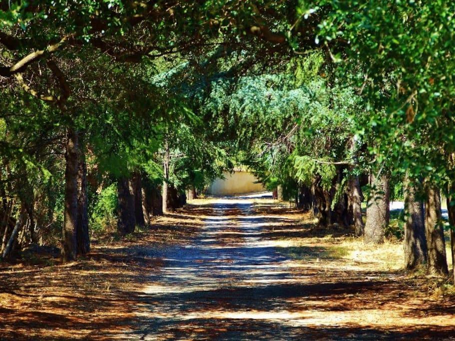 viale della tenuta