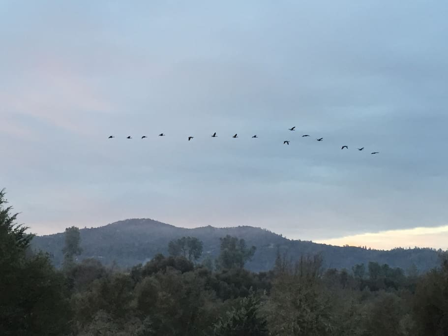 Migrating Geese from back porch