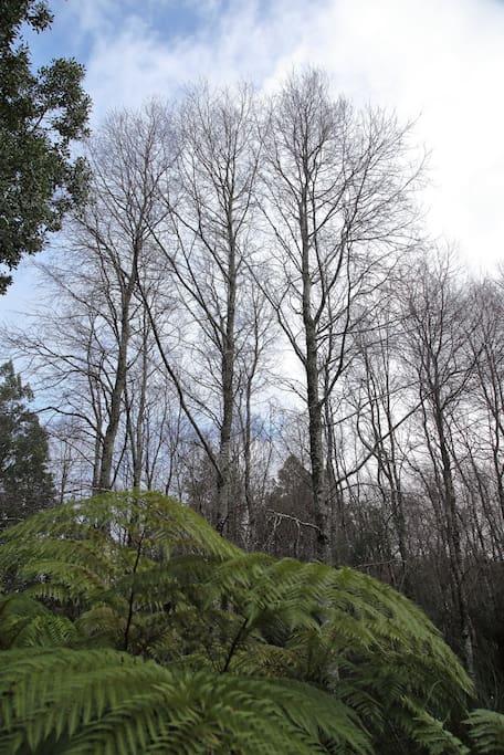 Nuestro bosque