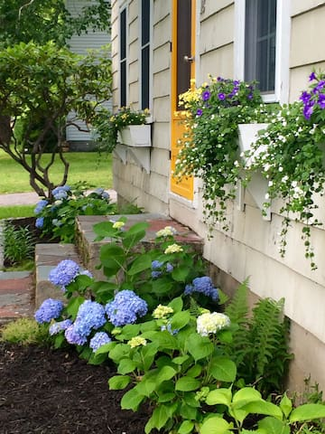 Front of the house in bloom.