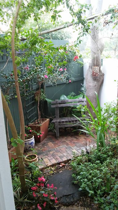 This is the little private garden off the kitchen