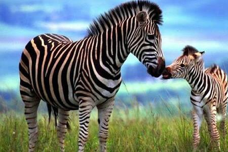 Zebra Chalet ℅FAKE TEST LISTING℅ - Jordan Valley - Egyéb