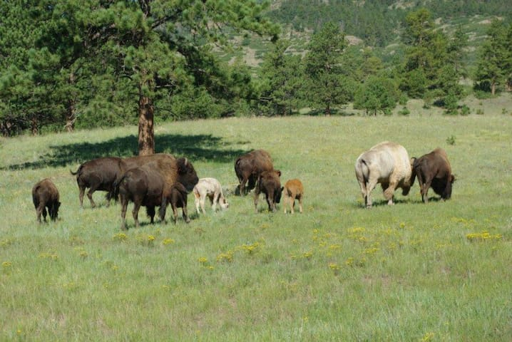 RV Space w/power hookup on a Bison & Yak Ranch - Bend - Other