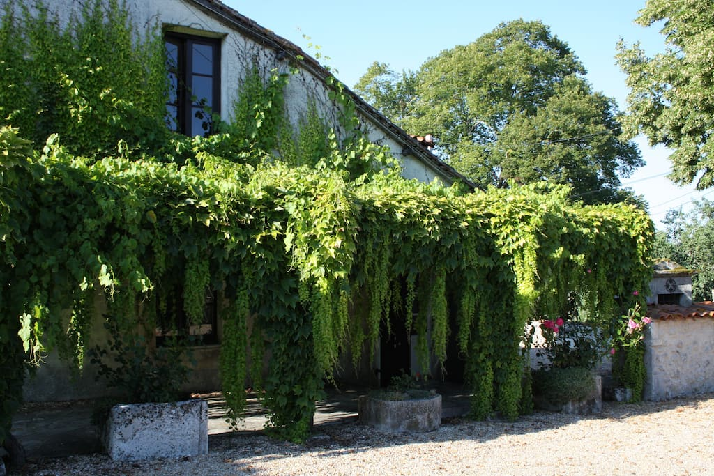 vine covered pergola at front of house