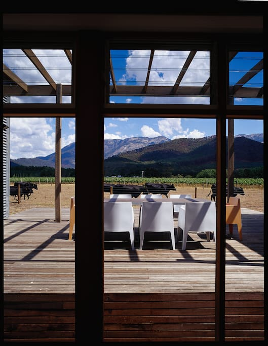 View from outdoor deck overlooking our stud cattle and  boutique vineyard
