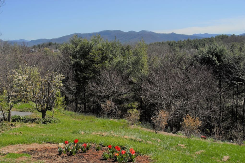 Lovely view of the Mountains on the Blue Ridge Parkway and our flowers of Spring.