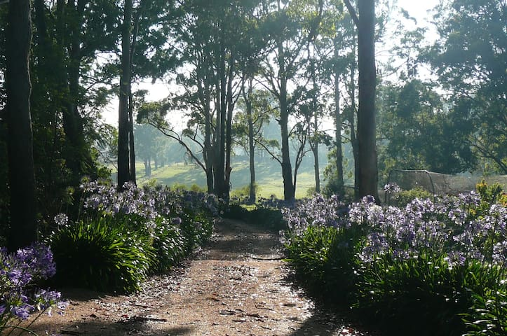 The short driveway meanders among the gum trees and the blue agapanthus. In summer they provide a very attractive sight.