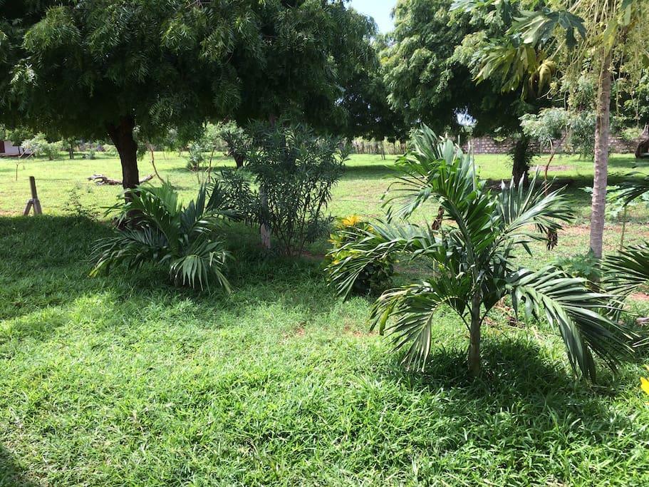 3 acreas of greenery and freshness