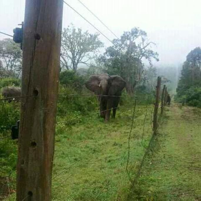 The home is right next to Aberdares National Park and elephants are our common visitors :-)