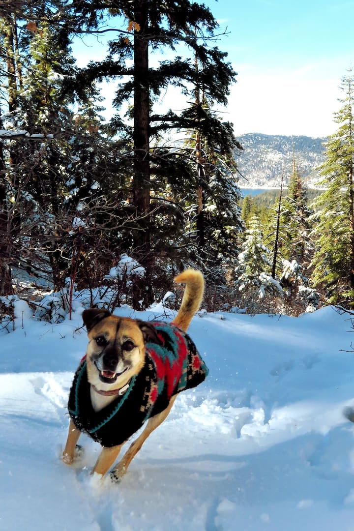 Even dogs love this hike!