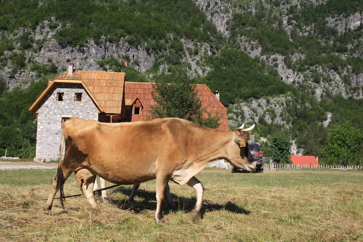 Shpella Guesthouse Theth #mountain #theth #albania #farm #river #Traditional #cow