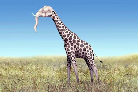 Elephant Giraffe Excursion %FAKE% - Jordan Valley